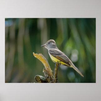 Pequeño pájaro encaramado en la ramita poster