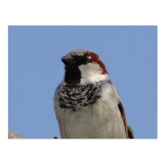 Pequeño pájaro lindo tarjeta postal