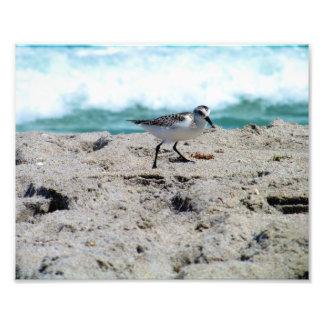Pequeño pájaro por la costa arte fotografico