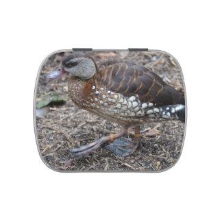 pequeño pájaro que camina del pato marrón y blanco jarrones de dulces