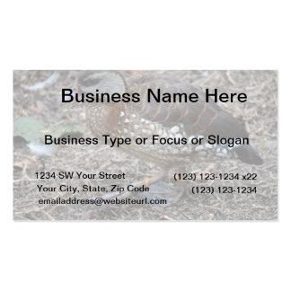 pequeño pájaro que camina del pato marrón y blanco tarjetas de negocios