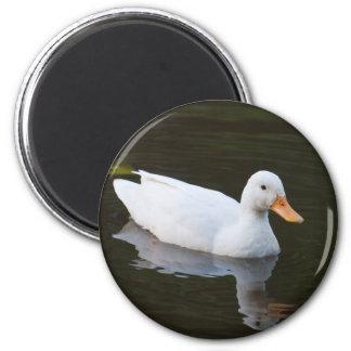 Pequeño pato blanco imán redondo 5 cm