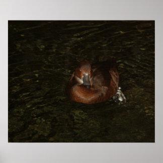 Pequeño pato de Brown - poster