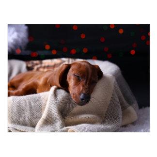 Pequeño perrito lindo del Dachshund en navidad Tarjeta Postal