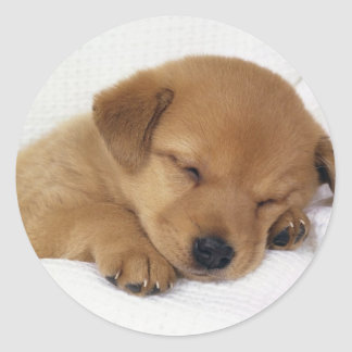 Pequeño perrito lindo pegatina redonda