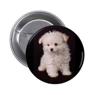 Pequeño perrito maltés pin