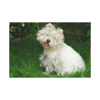 Pequeño perro blanco en lona impresiones en lienzo estiradas