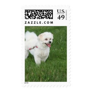Pequeño perro blanco sello