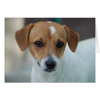 Pequeño perro dulce tarjeta pequeña