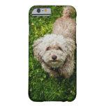 Pequeño perro que mira para arriba la cámara funda barely there iPhone 6