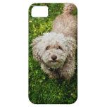 Pequeño perro que mira para arriba la cámara funda para iPhone SE/5/5s