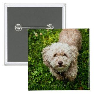 Pequeño perro que mira para arriba la cámara pin cuadrado
