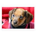 Pequeño perro tarjetas postales