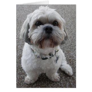 Pequeño perro toda la ocasión tarjeta de felicitación