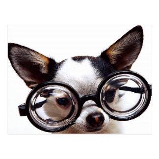 Pequeño perro, vidrios grandes postales