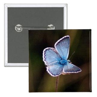 Pequeño Pin azul del cuadrado de la mariposa