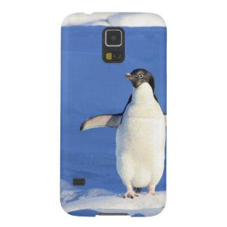 Pequeño pingüino gallardo carcasa para galaxy s5