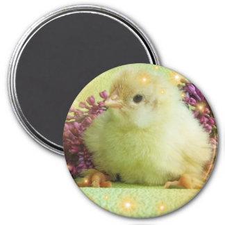 pequeño pollo imán redondo 7 cm