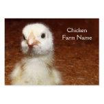 Pequeño polluelo amarillo - granja de pollo tarjetas de visita grandes