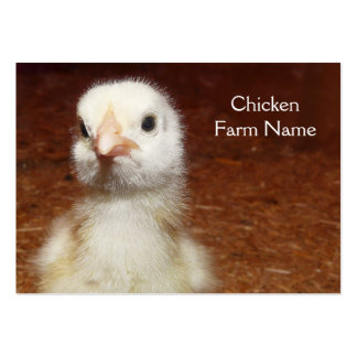 Pequeño polluelo amarillo - granja de pollo plantilla de tarjeta de negocio