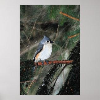 Pequeño poster azul del pájaro