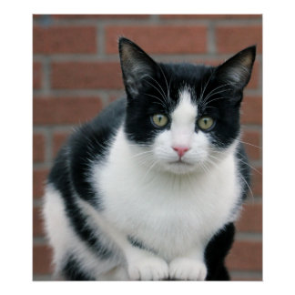 Pequeño poster blanco y negro del gato