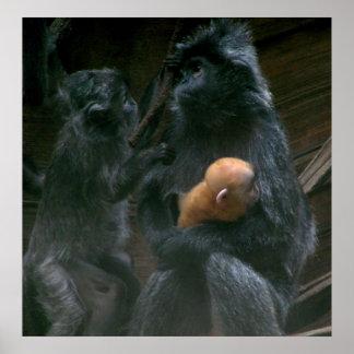 Pequeño poster de la familia del mono
