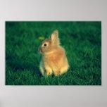 Pequeño poster del conejo