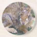 Pequeño práctico de costa salvaje del conejito posavasos diseño