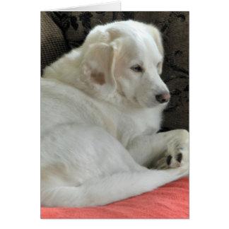Pequeño retrato blanco lindo del perro tarjetón