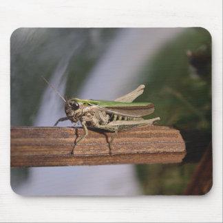Pequeño saltamontes verde mouse pads