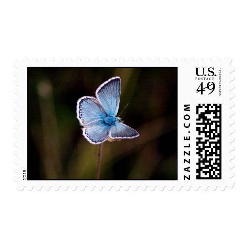 Pequeño sello azul de la foto de la mariposa