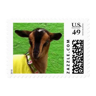Pequeño sello del niño nigeriano de la cabra
