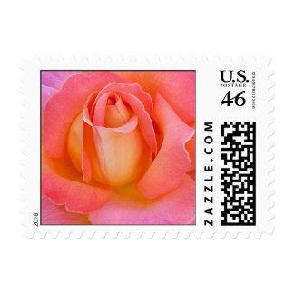 Pequeño sello del rosa