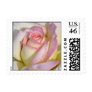 Pequeño sello del rosa de Dewey