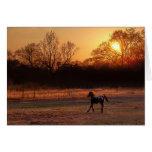 Pequeño semental en la puesta del sol tarjetón