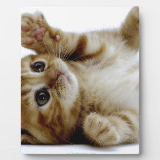 pequeño tabby lindo del jengibre del mascota del g placas para mostrar