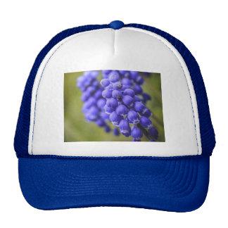 Pequeños brotes azules gorras de camionero