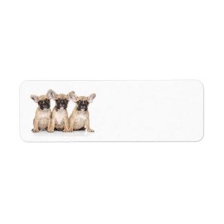 Pequeños dogos franceses lindos etiquetas de remite
