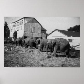 Pequeños elefantes en la feria posters