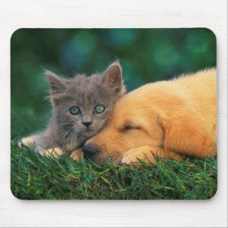 Pequeños gatito y perrito lindos junto alfombrilla de ratón