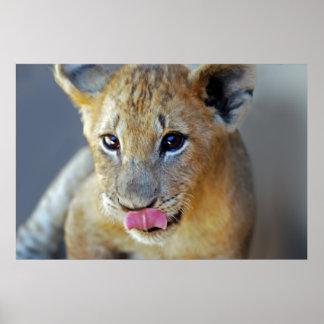 Pequeños leones hambrientos póster