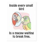 Pequeños pájaros tarjeta postal