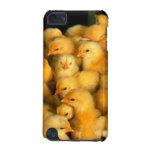 Pequeños polluelos lindos
