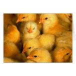 Pequeños polluelos lindos tarjetas