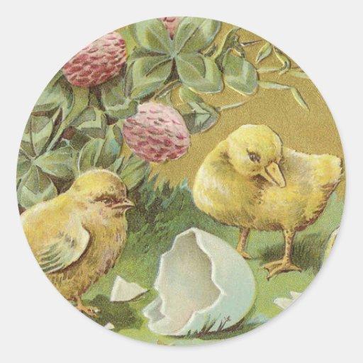 Pequeños polluelos y un anadón pegatina redonda
