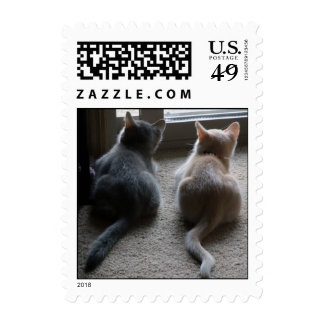 Pequeños sellos del jaspe y del gatito de Kaylee