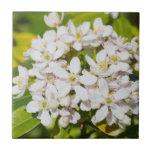 Pequeños wildflowers blancos tejas