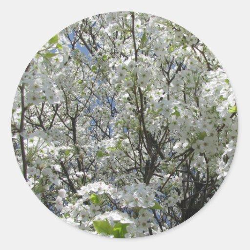 Pera de Bradford en la floración Pegatinas Redondas