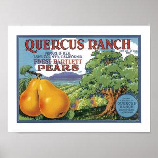 Peras de bartlett del rancho del quercus impresiones